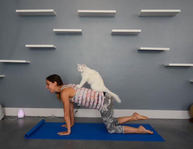 Cat Yoga er en ting, og det lyder rigtigt